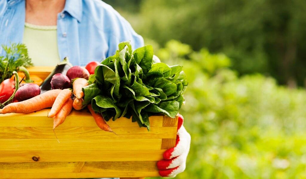 acido alfa lipoico alimentos vs suplementos